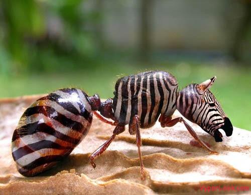 Hybrid-Animals1