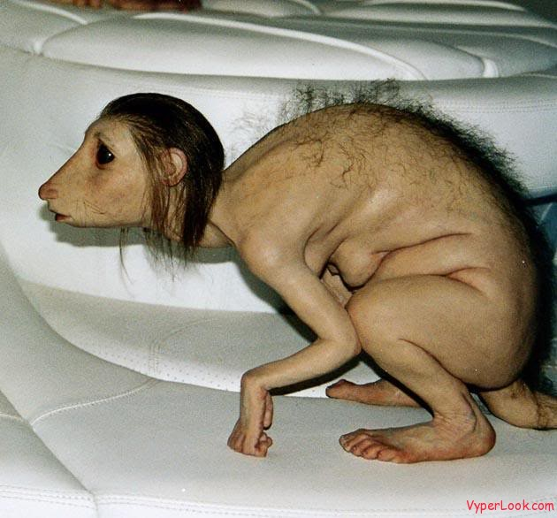 ratboy Unbelievable Genetic Hybrids And Mythological Animals Pictures Seen on www.VyperLook.com