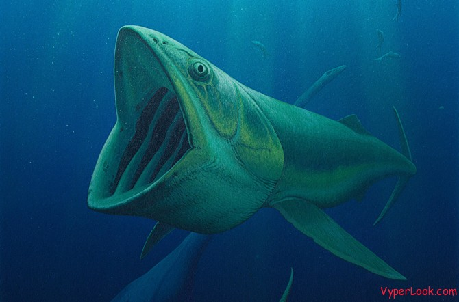 Many bizarre prehistoric species found in ocean odd for Oily fish representative species