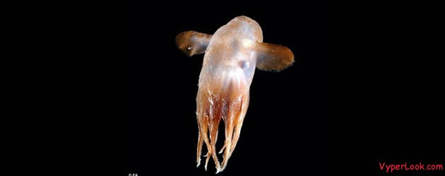 Many Bizarre Prehistoric Species Found in Ocean Pictures Seen on www.VyperLook.com