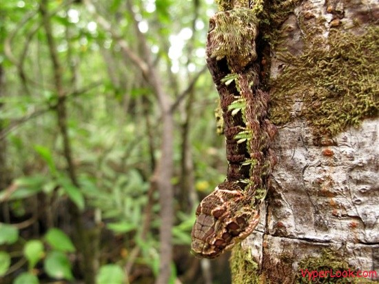 caterpillar-2-medium-tm