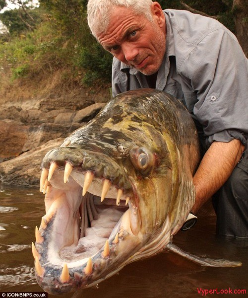Scary Looking Freshwater Fish Images & Pictures - Becuo