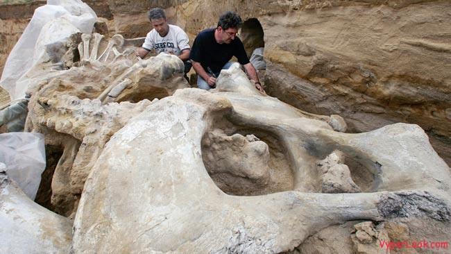 641460-mammoth