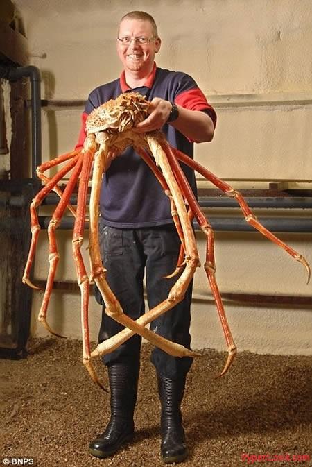 a97197_g131_4-crab