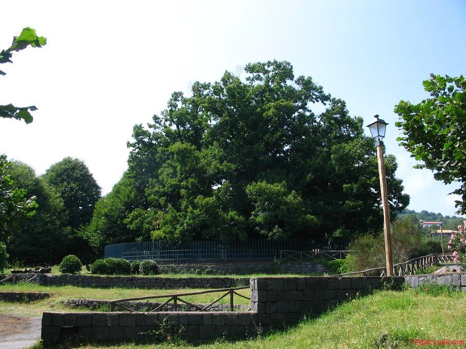 chestnut-tree-of-1000-horses