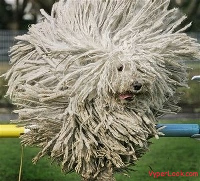 Unusual Dogs Haircuts 1