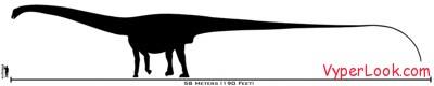 800px-human-amphicoelias_size_comparison-tm