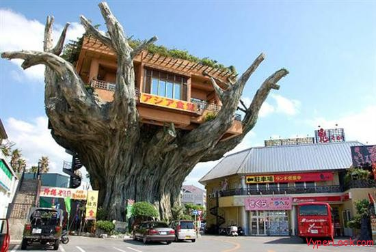 Naha Harbour tree house coffee shop