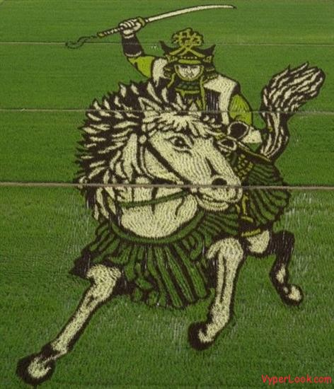 Rice Field Art 8