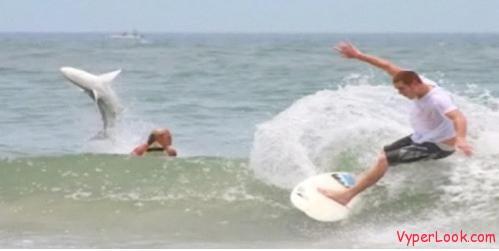 shark  jumping over surfer