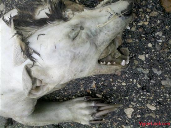 Mysterious roadkill creature
