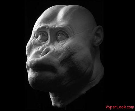Paranthropus aethiopicus
