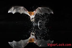 Bats Spooky And Funny Halloween Superstitions Pictures Seen on www.VyperLook.com
