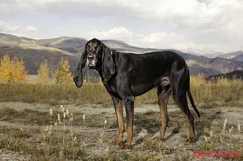 Dog with longest ears 2