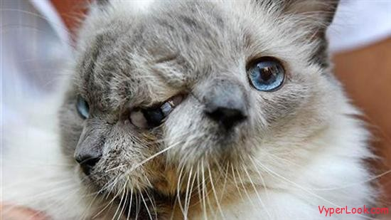 frank and louie  Oldest Two Faced Cat Still Alive   Amazing Video Pictures Seen on www.VyperLook.com