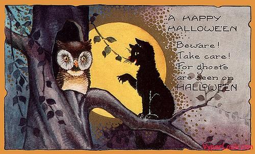 owl and black cat