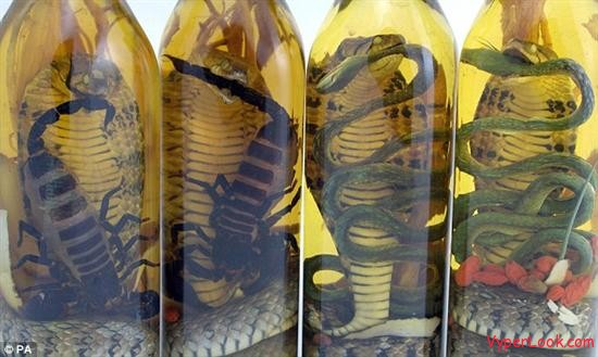 Snake and Scorpion Wine