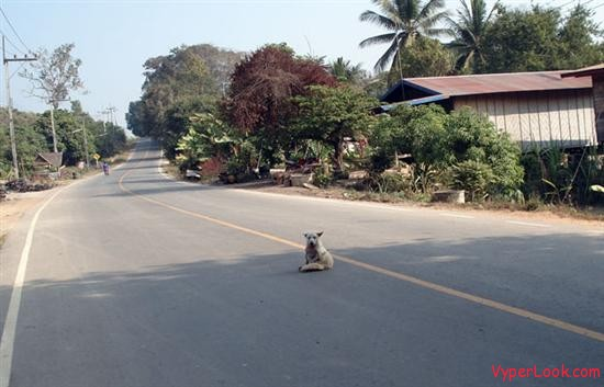 dog in th road