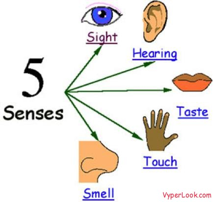 observation use your 5 senses to describe a scene essay