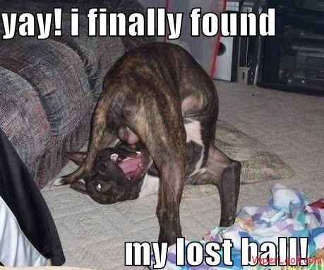 funny dog pictures found lost ball Funniest Videos Of Talking Dogs Pictures Seen on www.VyperLook.com