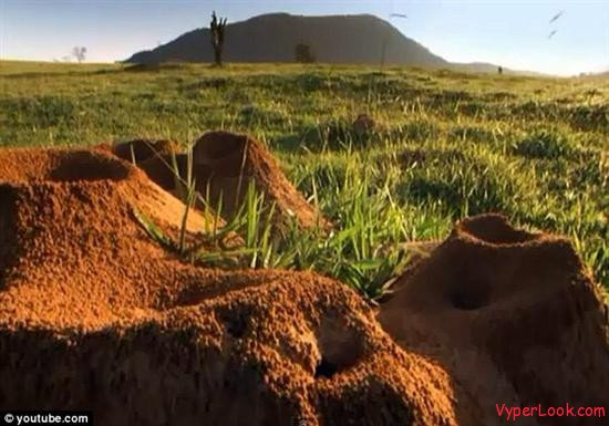 Giant Ant Hill Megalopolis Discovered In Brazil 2