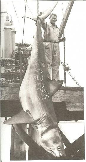 Great White 2664 lb Worlds Biggest Shark Ever Captured: 40 Feet Long as seen on CoolWeirdo.com