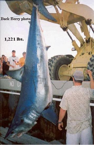 Heaviest Shortfin Mako Shark Worlds Biggest Shark Ever Captured: 40 Feet Long as seen on CoolWeirdo.com