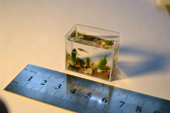 Worlds Smallest Aqurium Photos 2 Top 10 Smallest Animals In The World as seen on CoolWeirdo.com