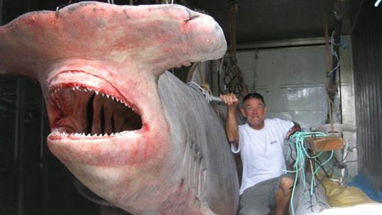 Worlds largest hammershark Worlds Biggest Shark Ever Captured: 40 Feet Long as seen on CoolWeirdo.com