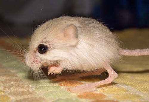 Top 10 Smallest Animals In The World