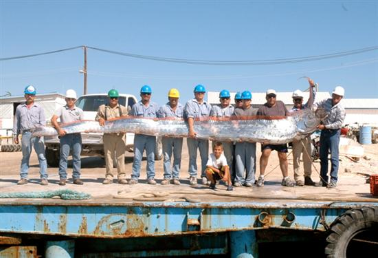 huge oarfish 8