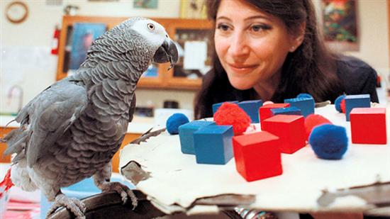 Alex smartest parrot 3
