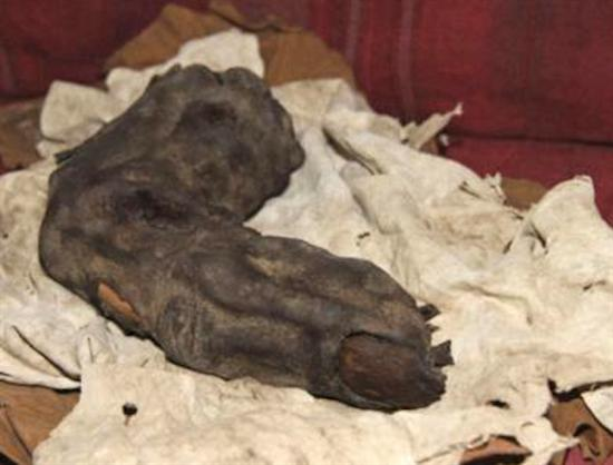 Giant mummy finger Egypt1
