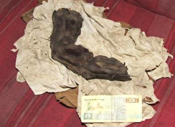 Giant mummy finger Egypt3