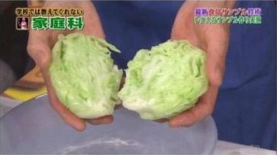 fake japanese cabbage 7