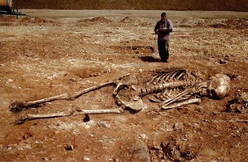 india giant bones