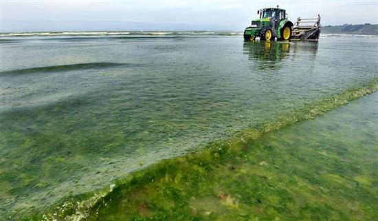 Carnivorous Algae denmark 1