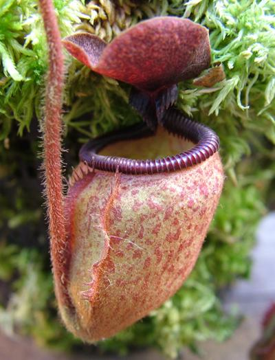 Nepenthes Killer Carnivorous Algae Attack The Beaches Of Denmark Pictures Seen on www.VyperLook.com