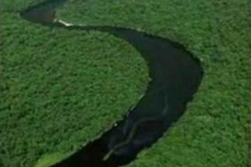 Borneo river Giant Snake