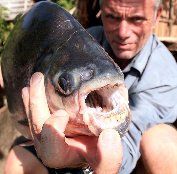 fish human teeth1