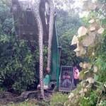 huge-snake-malaysia