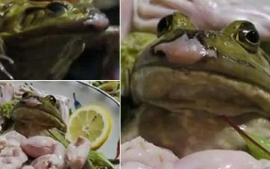 frog sashimi 1
