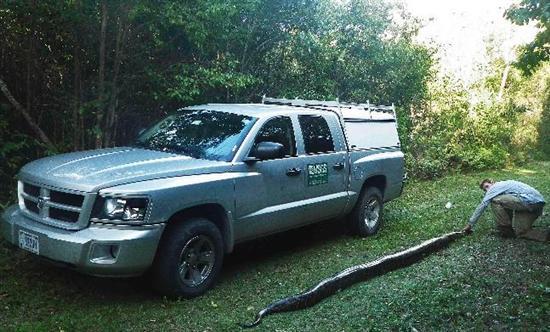 17 foot python everglades 6