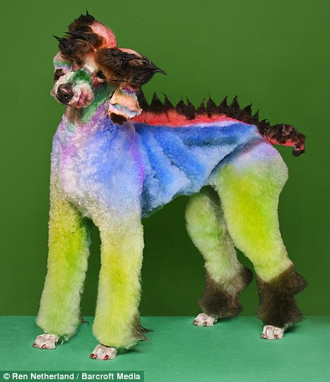 Extreme dog grooming 1 Strangest Hobbies Pictures Seen on www.VyperLook.com