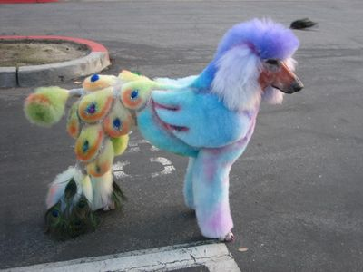 Extreme dog grooming 3 Strangest Hobbies Pictures Seen on www.VyperLook.com