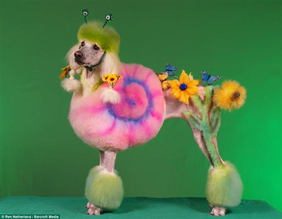Extreme dog grooming 5 Strangest Hobbies Pictures Seen on www.VyperLook.com