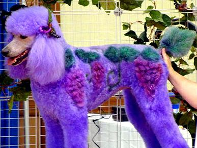 Extreme dog grooming 61 Strangest Hobbies Pictures Seen on www.VyperLook.com