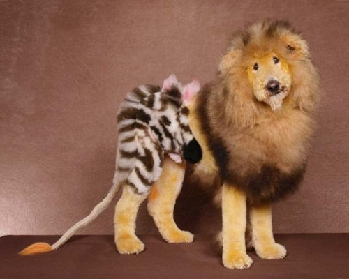 Extreme dog grooming 9 Strangest Hobbies Pictures Seen on www.VyperLook.com