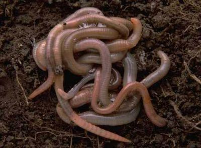 earth worms Weirdest Competitions In The World Pictures Seen on www.VyperLook.com