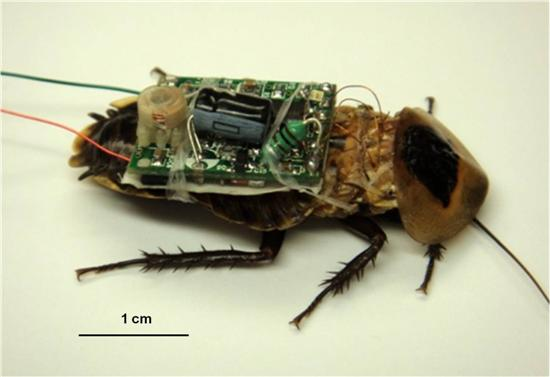 Cyborg Cockroach 2